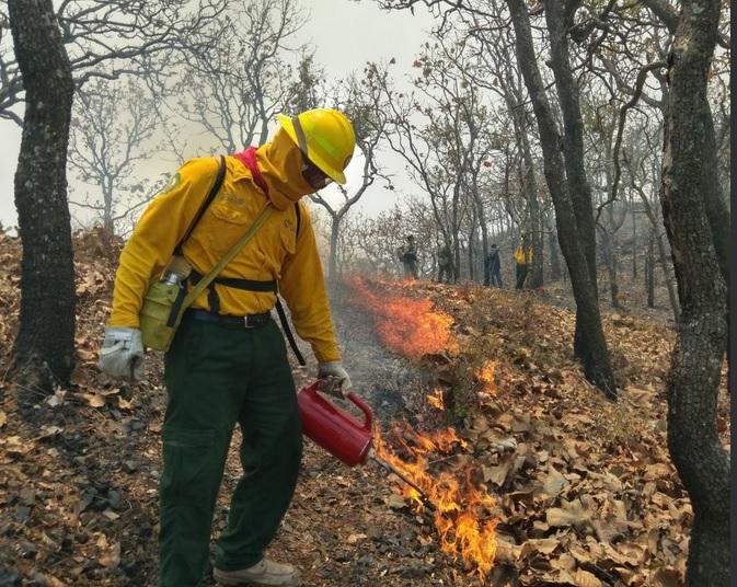 Más de 300 brigadistas atienden incendios forestales en el estado
