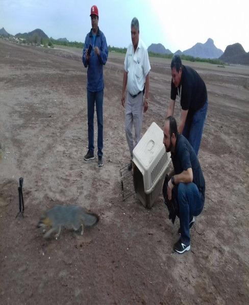 ROFEPA rescata y reintegra 4 ejemplares de fauna silvestre en Sinaloa